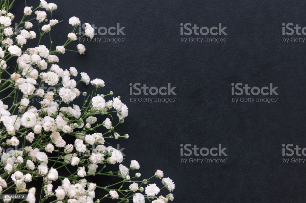 Gypsophila White Babys Breath Flower On Black Granite Table Background With Copy Space Isolated Beautiful Wallpaper For Valentine Or Wedding Backdrop Design Gypsophila Flower Is Mean Forever Love Stock Photo Download