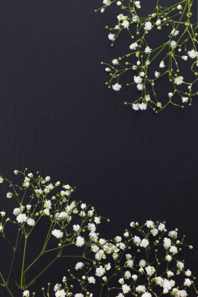 Gypsophila white small flowers on black stone background with copy picture id813593784?b=1&k=6&m=813593784&s=612x612&w=0&h=to3cbvvzv cecybmex4j8dlm gbzqdowc6hv0sdh7fk=