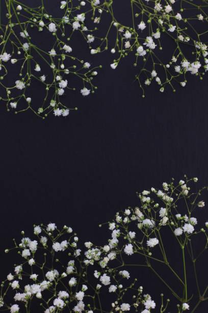 Gypsophila white small flowers on black stone background with copy picture id813594292?b=1&k=6&m=813594292&s=612x612&w=0&h=oaazkawhppfujn5xjlslw9lultiopgajwtorauk93vq=