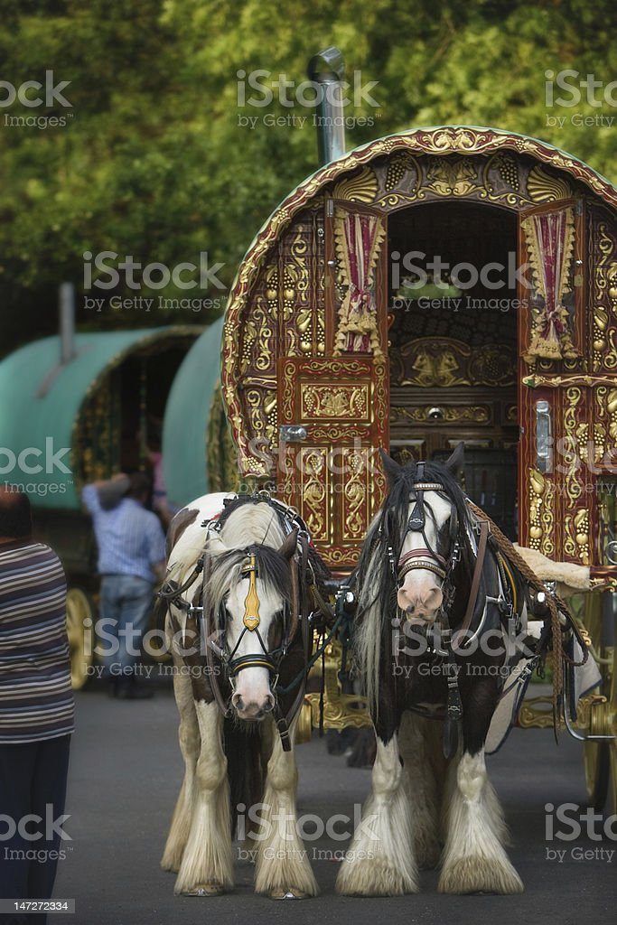 Gypsy Horse Caravan with two mares stock photo