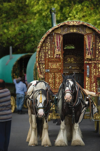 Gypsy Horse Caravan with two mares Gypsy Horse Caravan with two mares romani people stock pictures, royalty-free photos & images