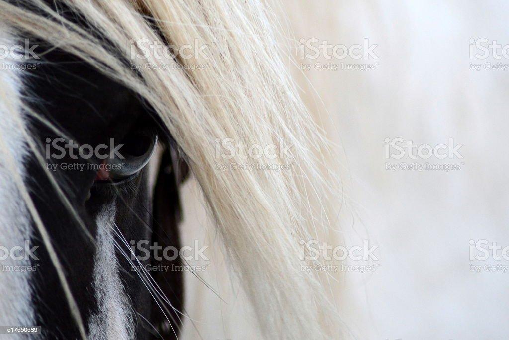 Gypsy horse. stock photo