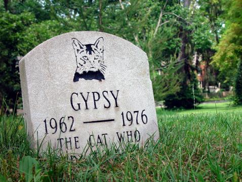 Gypsy, the Dead Cat