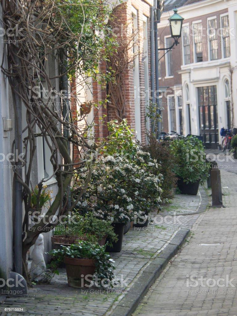 haarlem in holland 免版稅 stock photo