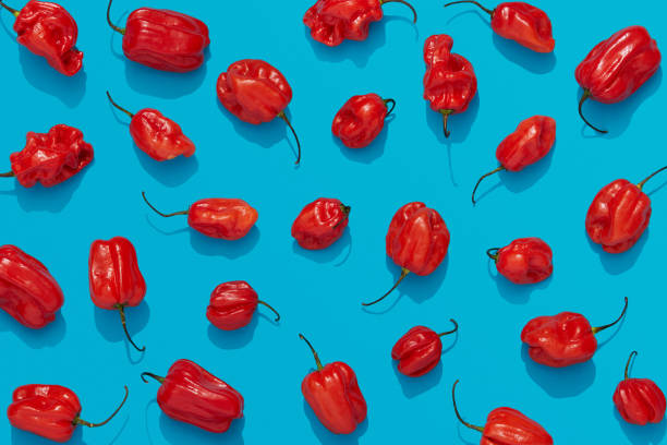 Habanero peppers on blue background, red chili flat lay stock photo