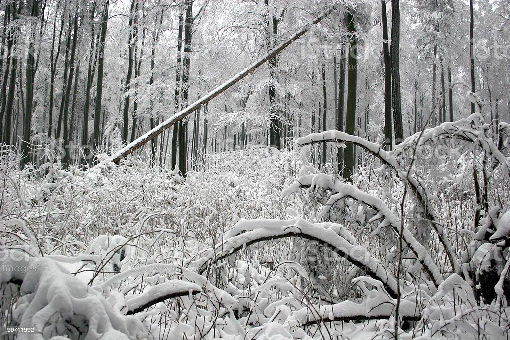 Habichtswald (Kassel) im Winter royalty-free stock photo