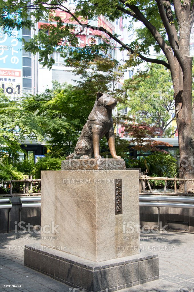 Hachiko Dog Statue In Front Of Shibuya Station Tokyo This ...