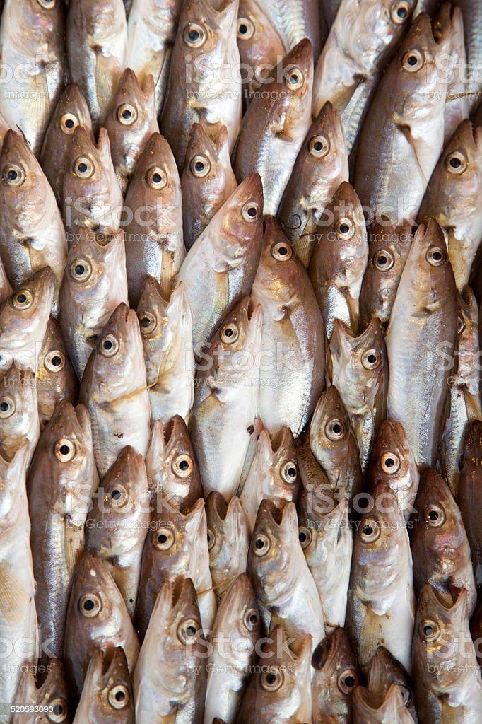 haddock fishes stock photo