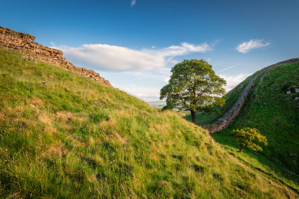 Hadrian's Wall at Sycamore Gap Hadrian's Wall is a World Heritage Site in the beautiful Northumberland National Park. Popular with walkers along the Hadrian's Wall Path and Pennine Way sycamore tree stock pictures, royalty-free photos & images