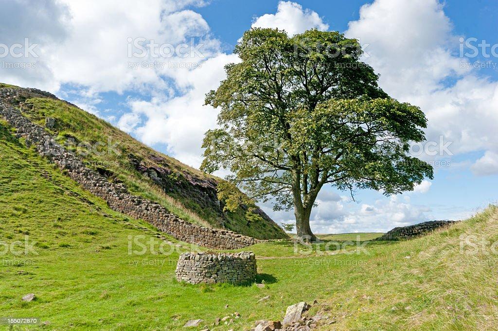 Hadrian's wall Robin Hood tree stock photo
