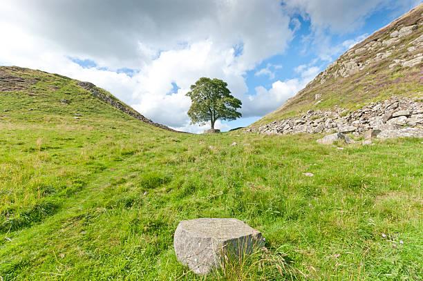 hadrian's wall robin hood tree - hadrian's wall stock-fotos und bilder
