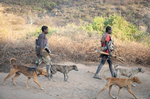hadzabe men with their bows and arrows going for a hunt at sunrise, accompanied by their hunting dogs stock photo