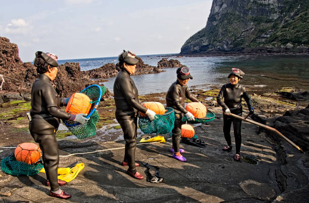 haenyeo traditional female fishing divers of jeju island - jeju island stock photos and pictures
