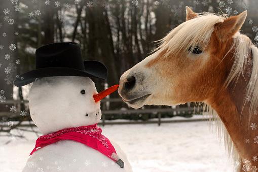 Haflinger Horse Steals a Snowman's Carrot Nose