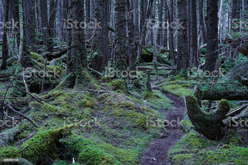 Haida Gwaii forest stock photo