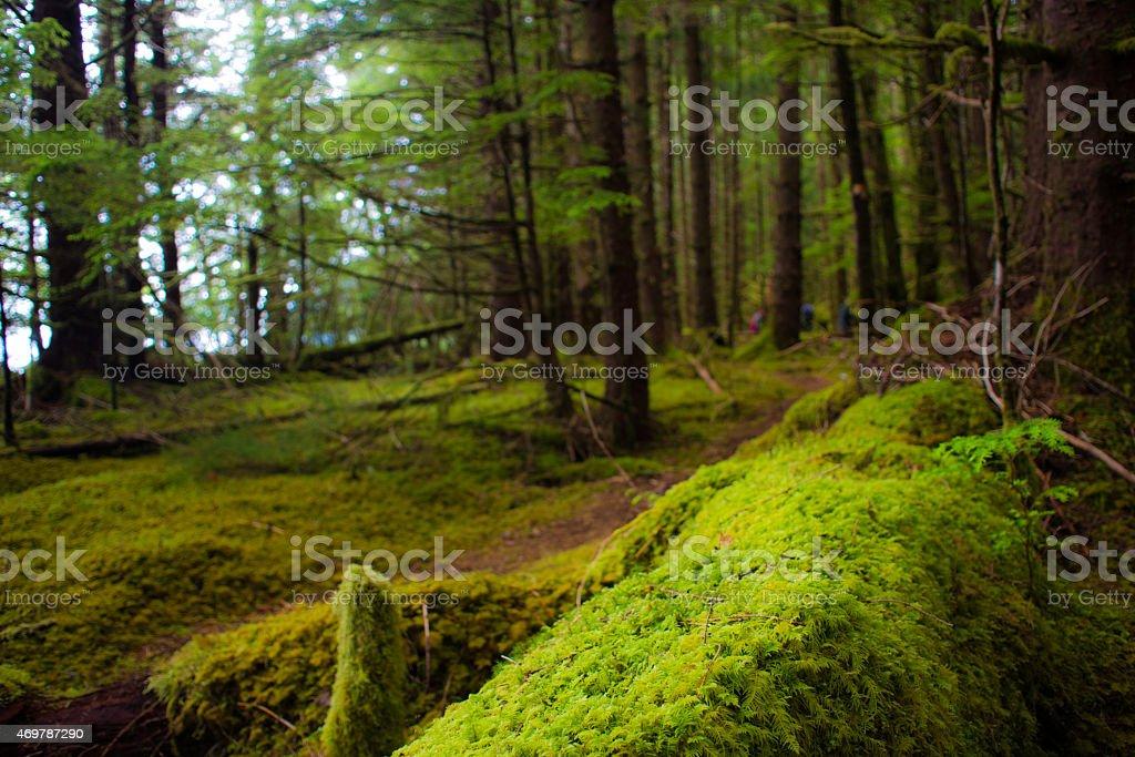 Haida Gwaii Rain Forest stock photo