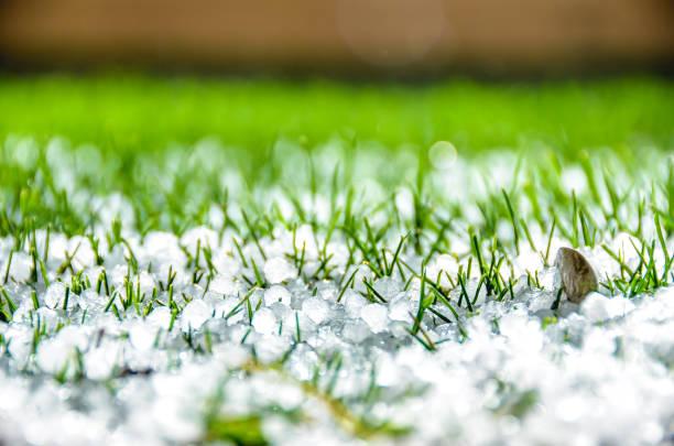 Hailstones over green yard stock photo
