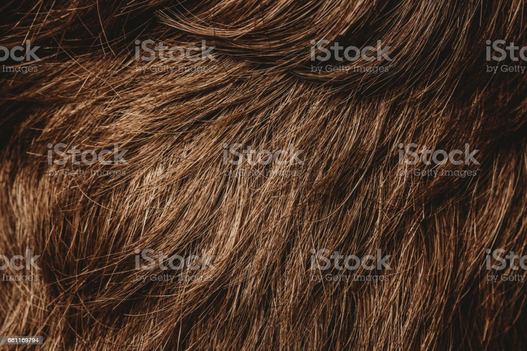 Hair Closeup stock photo