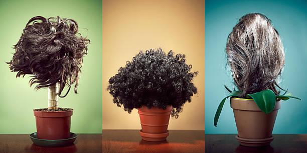 haar trans-plant - haare wachsen stock-fotos und bilder