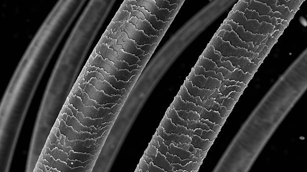 hair under microscope - human hair stock photos and pictures