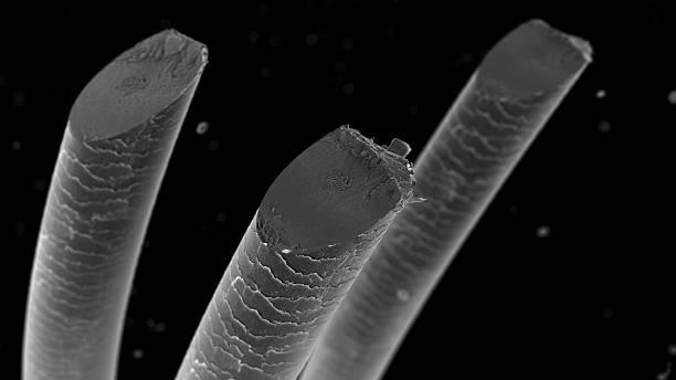 Haircut under microscope stock photo