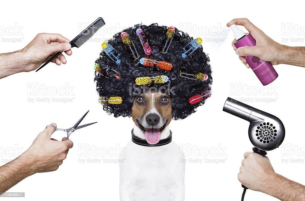 hairdresser  scissors comb dog spray stock photo