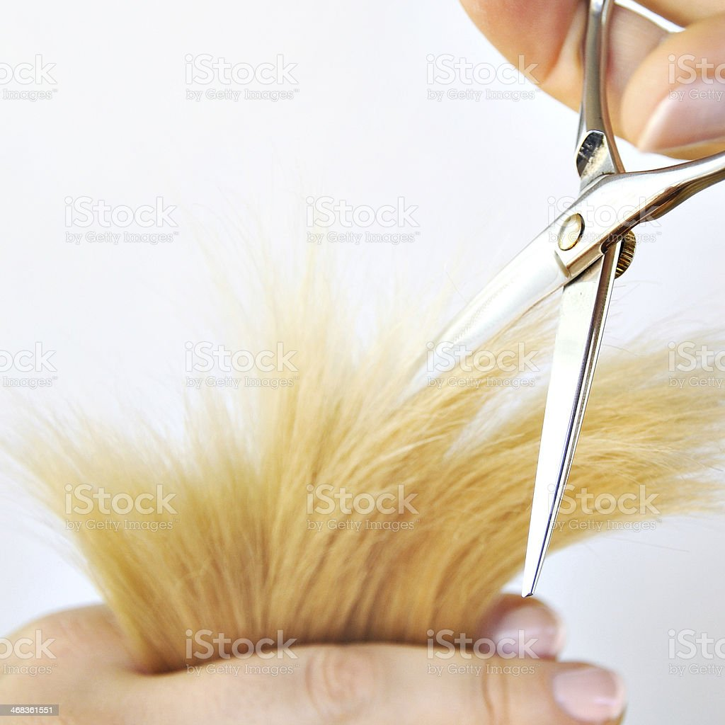 Hairdresser's hands cutting hair. royalty-free stock photo