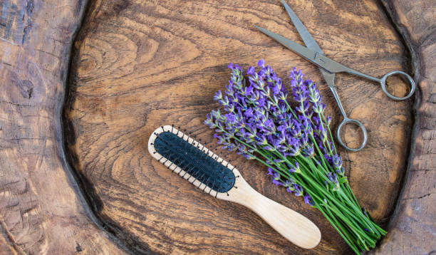 Hairdressing and styling concept. Close up of hair brush, open metal scissors and purple lavender flowers in rustic wooden bowl. Top view of hairdressing tools. spa belgium stock pictures, royalty-free photos & images
