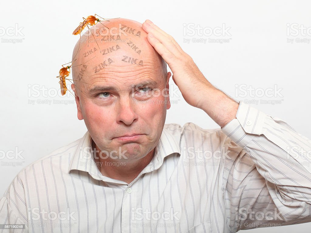 Hairless man with sucking mosquitos on his head. stock photo