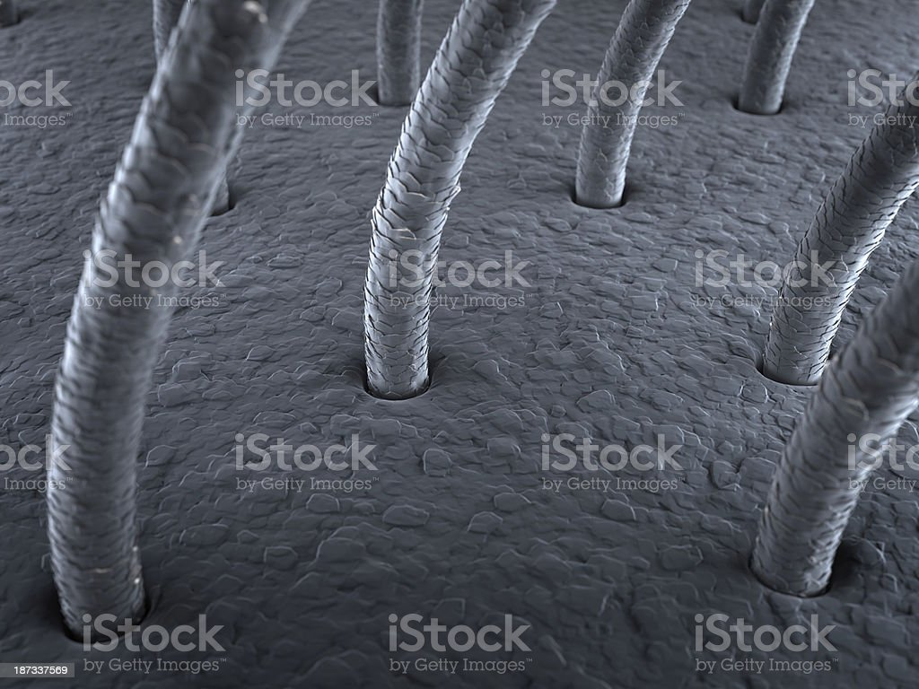 hairs under the microscope stock photo