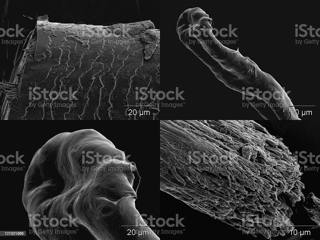 Hairy details stock photo
