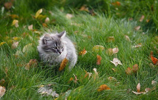 Hairy kitten on the grass stock photo