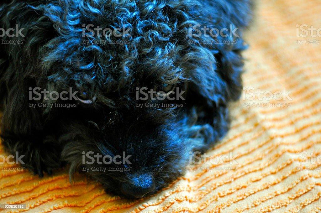 Hairy puppy stock photo