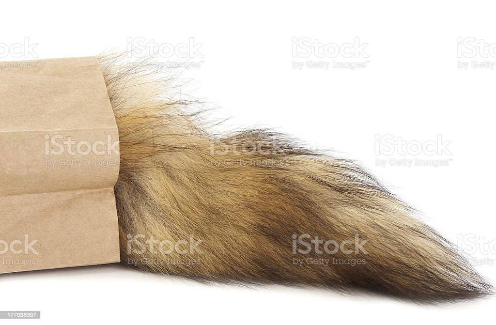 Hairy tail in paper bag stock photo