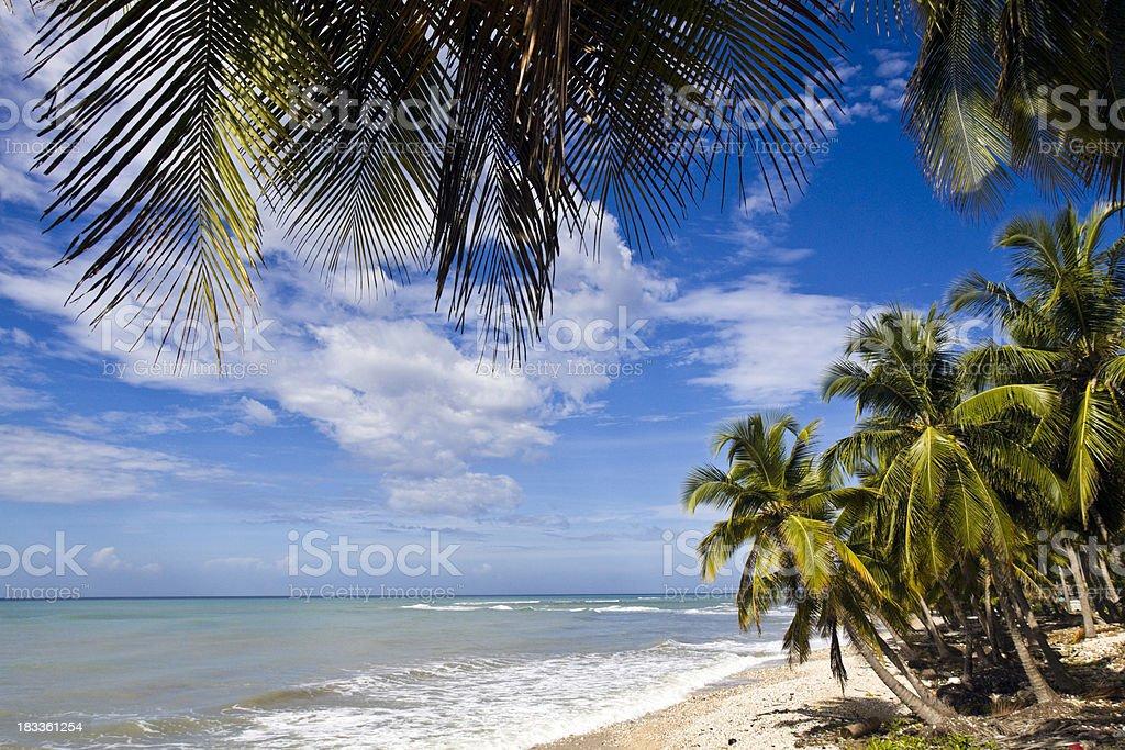 \'Haiti, Sud Province, coconut trees on beach, Caribbean Sea.\'