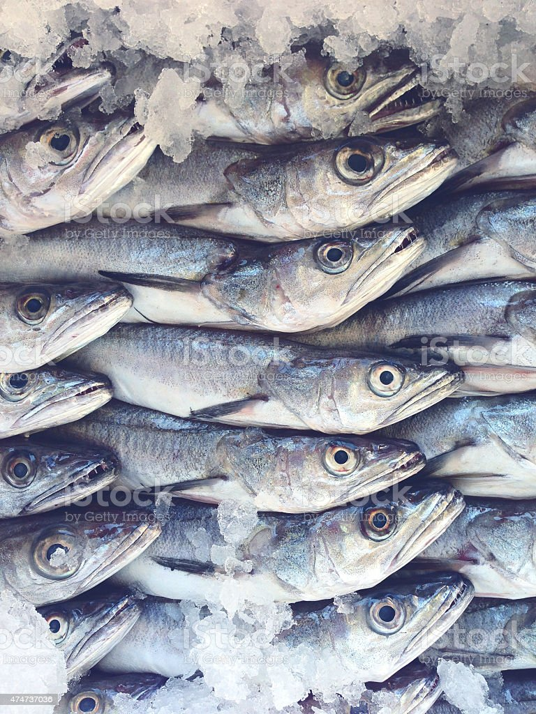 Hake fish at the fishmarket royalty-free stock photo