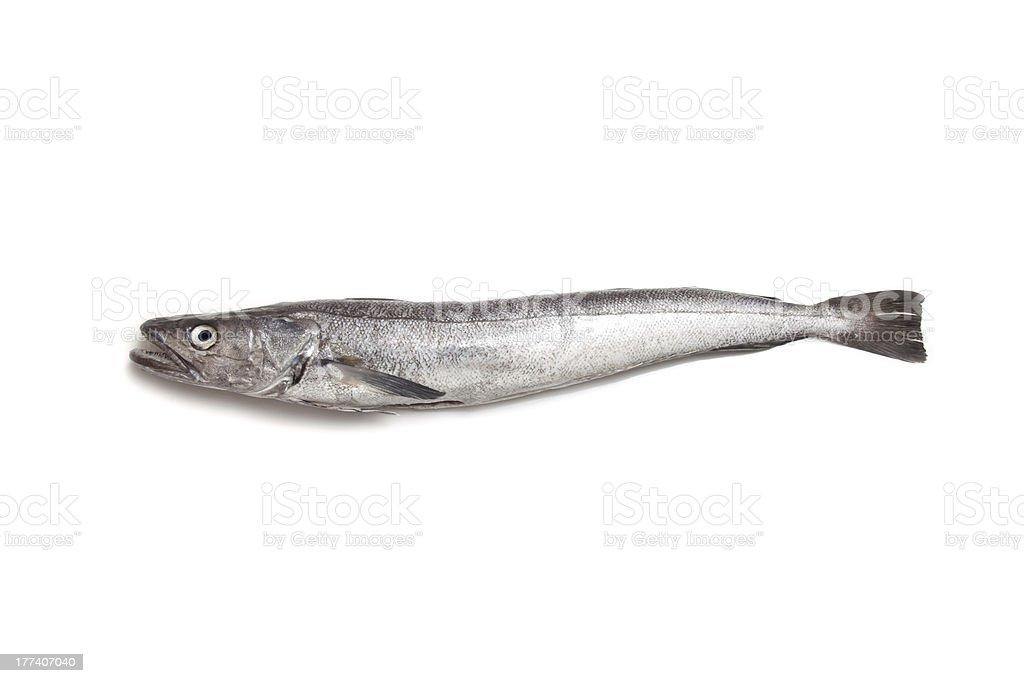 Hake fish isolated on a white background. stock photo