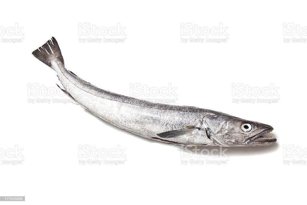 Hake fish on a white background. stock photo