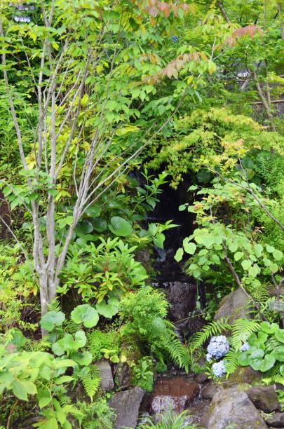 Hakone Japan Green Scenery stock photo