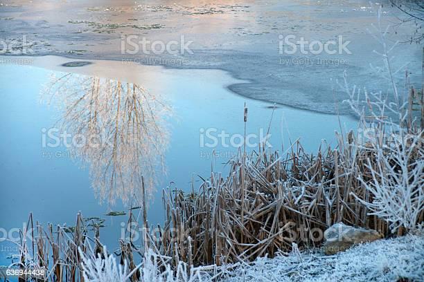 Zur Hälfte zugefrorener See oder Teich im Winter mit einer Spiegelung von Bäumen. Am Ufer mit Raureif bedecktes, steif gefrorenes Schilff.