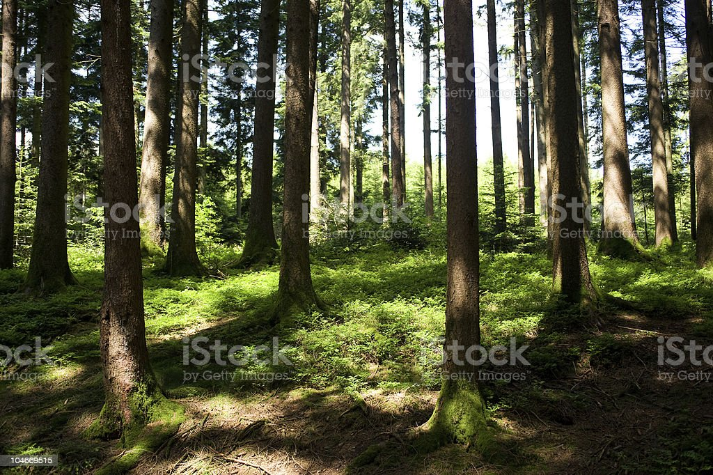 hale forest royalty-free stock photo