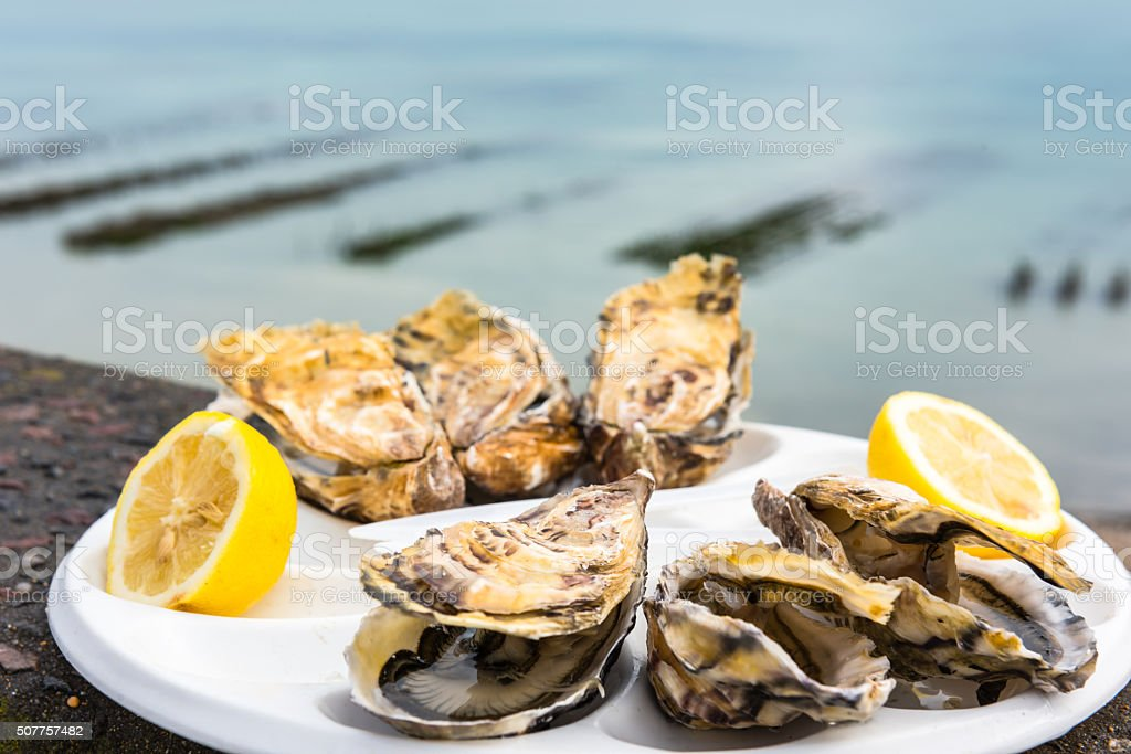 Half a dozen oysters on a plastic plate stock photo