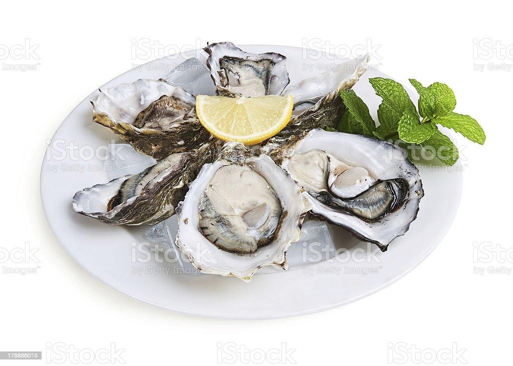 half a dozen oysters stock photo