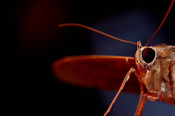 Half a moth stock photo