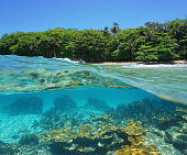 Split image half above and underwater of a tropical shore with lush vegetation and corals below the surface, Caribbean sea, Costa Rica