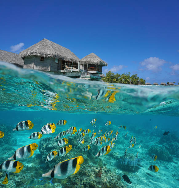 Half and half tropical bungalow and school of fish Half and half, tropical bungalow over the water with a school of fish underwater, French Polynesia, Tikehau atoll, Pacific ocean south pacific ocean stock pictures, royalty-free photos & images