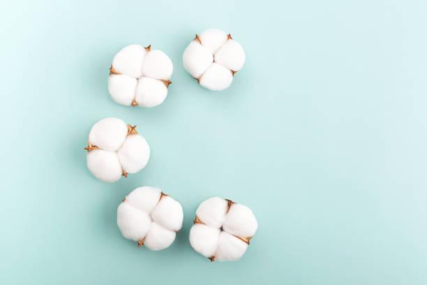 Ein halber Kreis aus Baumwollblumen auf hellgrünem Hintergrund. – Foto