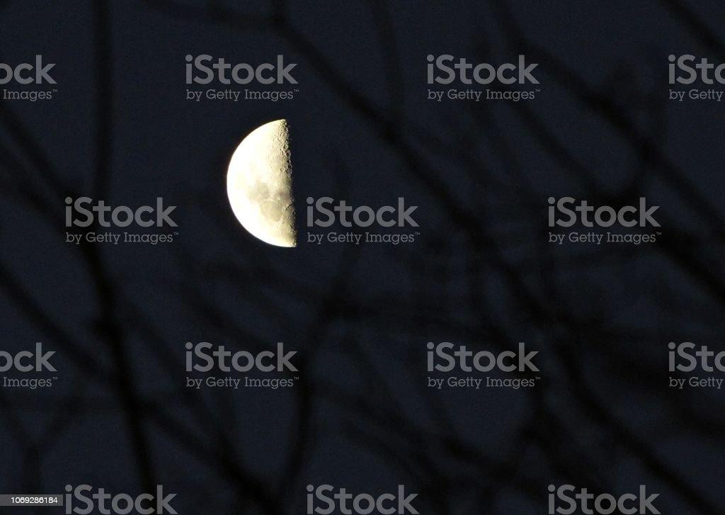 Meia lua cheia atrás de uma árvore - foto de acervo
