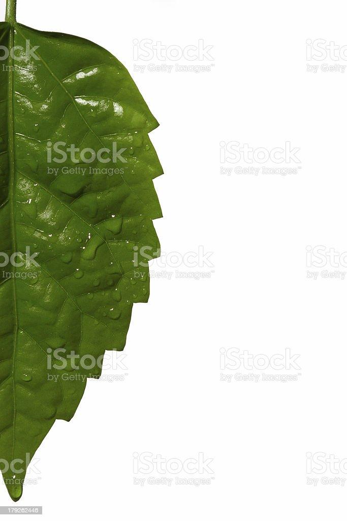 half leaf royalty-free stock photo