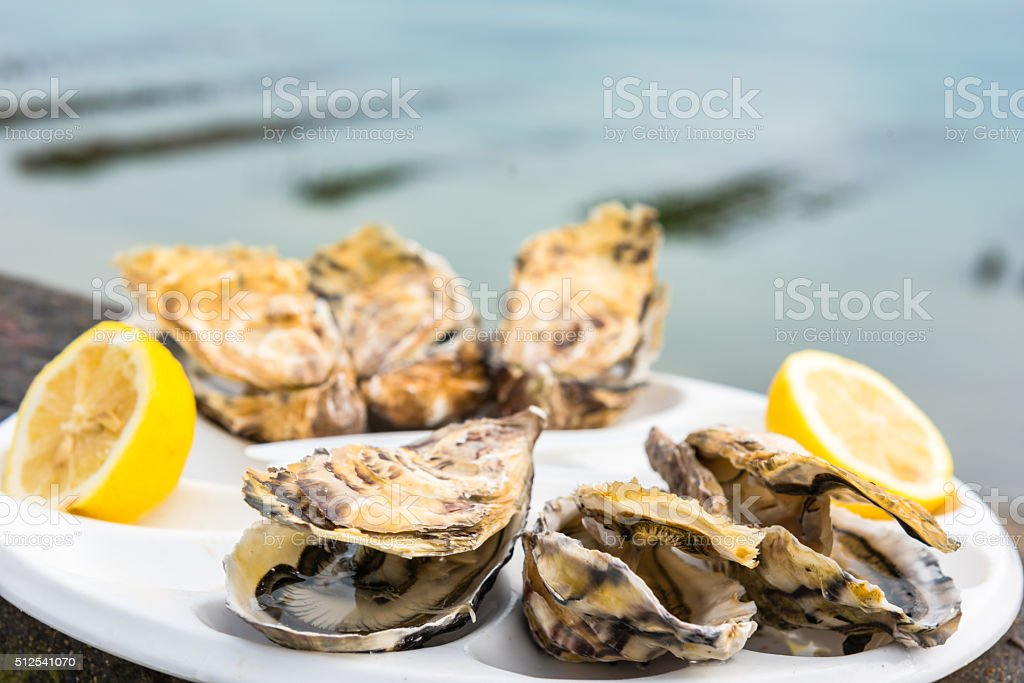Half of dozen oysters on a plastic plate stock photo